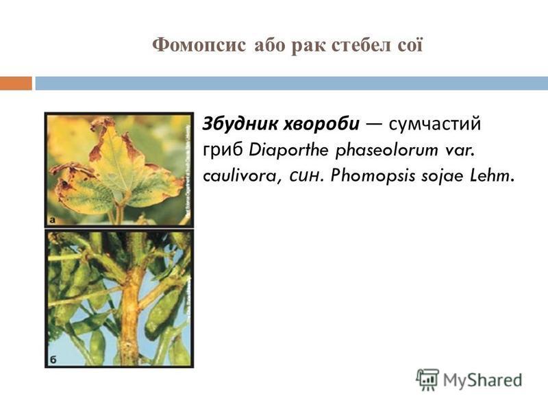 Фомопсис або рак стебел сої Збудник хвороби сумчастий гриб Diaporthe phaseolorum var. caulivora, син. Phomopsis sojae Lehm.