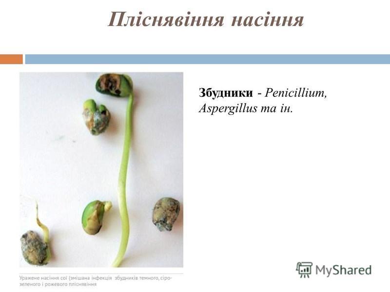 Пліснявіння насіння Збудники - Penicillium, Aspergillus та ін.