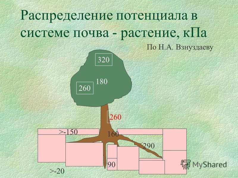 Распределение потенциала в системе почва - растение, к Па >-150 180 320 260 290 160 90 >-20 По Н.А. Взнуздаеву