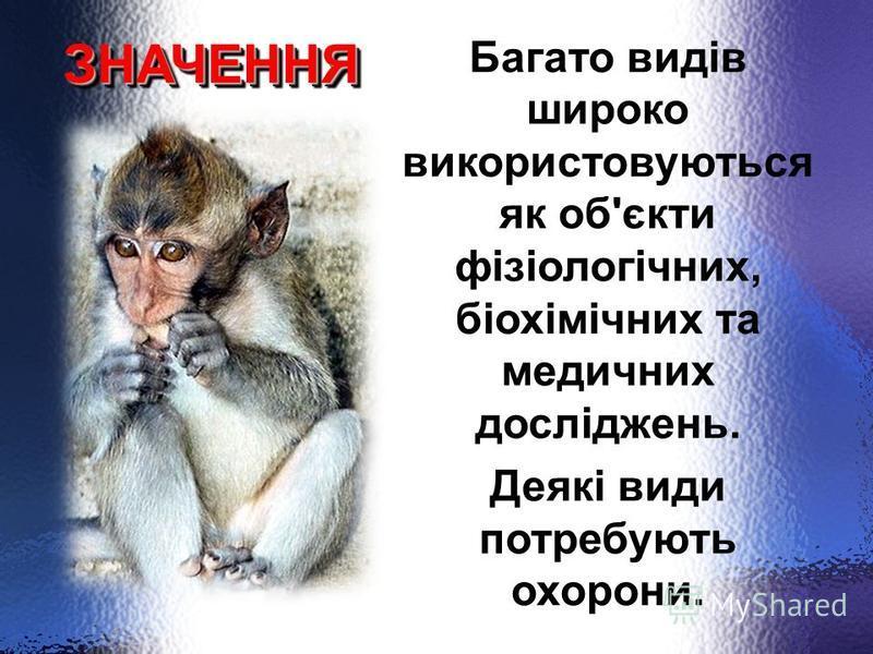 Ряд ПРИМАТИ ПідрядНАПІВМАВПИ (нижчі примати) Підряд МАВПИ (вищі примати) Лемури,лорі.руконіжки, довгопяти ШИРОКОНОСІ: мармозетка, ревун, капуцин. (дрібні, мають довгий хвіст) ВУЗЬКОНОСІ (короткий хвіст) СОБАКОГОЛОВІ (макаки резус, японський макак, па