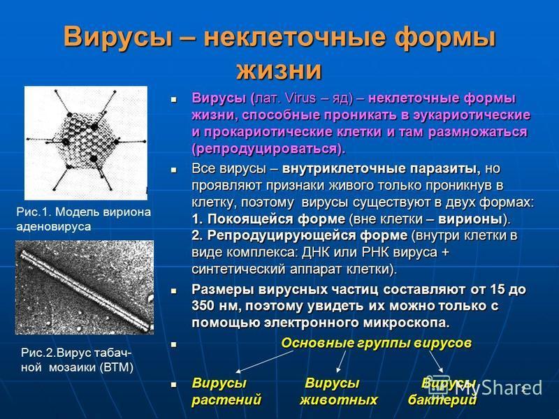 2 Вирусы – неклеточные формы жизни Вирусы (лат. Virus – яд) – неклеточные формы жизни, способные проникать в эукариотические и прокариотические клетки и там размножаться (репродуцироваться). Вирусы (лат. Virus – яд) – неклеточные формы жизни, способн