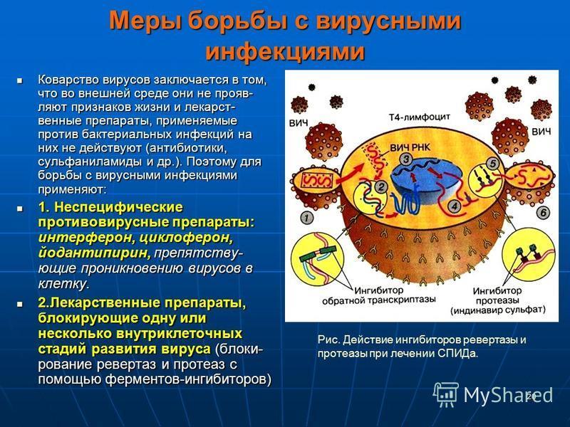 20 Меры борьбы с вирусными инфекциями Коварство вирусов заключается в том, что во внешней среде они не прояв- ляют признаков жизни и лекарст- венные препараты, применяемые против бактериальных инфекций на них не действуют (антибиотики, сульфаниламиды