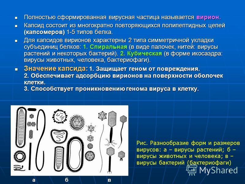 5 Полностью сформированная вирусная частица называется вирион. Полностью сформированная вирусная частица называется вирион. Капсид состоит из многократно повторяющихся полипептидных цепей (капсомеров) 1-5 типов белка. Капсид состоит из многократно по