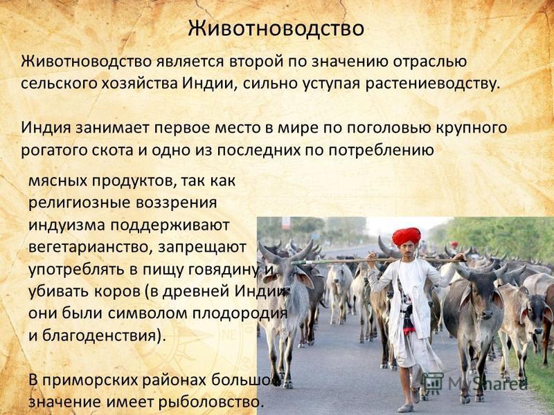 такое животноводство знасение отрасли в народном хозяйстве мазке находятся