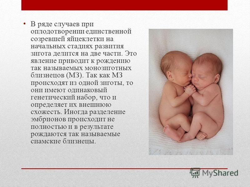 В ряде случаев при оплодотворении единственной созревшей яйцеклетки на начальных стадиях развития зигота делится на две части. Это явление приводит к рождению так называемых монозиготных близнецов (МЗ). Так как МЗ происходят из одной зиготы, то они и