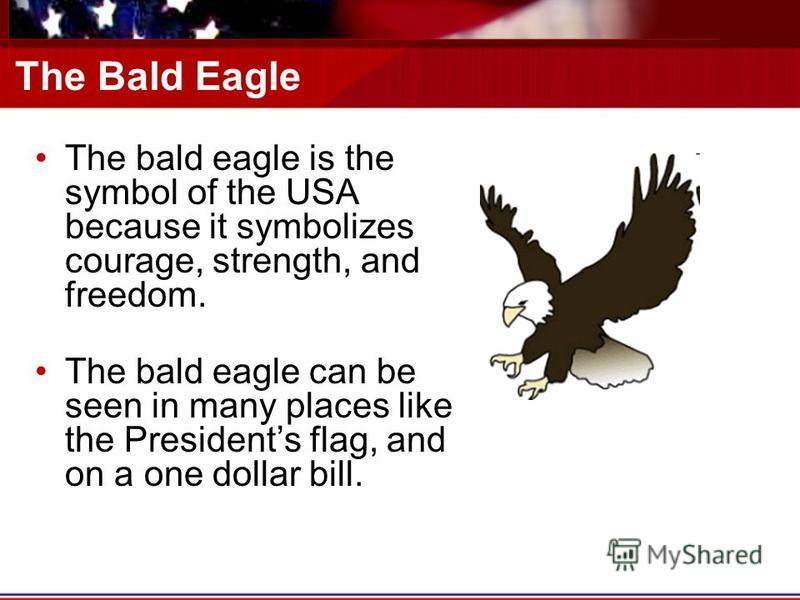 The Bald Eagle The bald eagle is the symbol of the USA because it symbolizes courage, strength, and freedom. The bald eagle can be seen in many places like the Presidents flag, and on a one dollar bill.