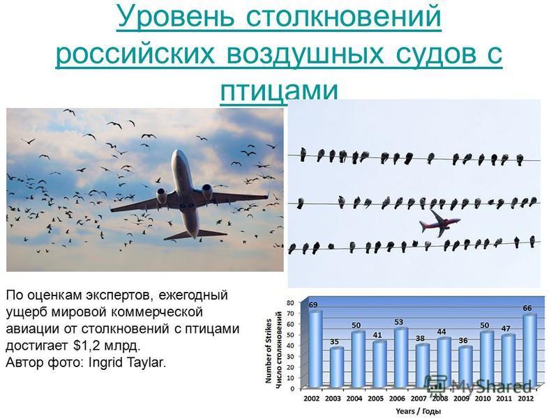 Уровень столкновений российских воздушных судов с птицами По оценкам экспертов, ежегодный ущерб мировой коммерческой авиации от столкновений с птицами достигает $1,2 млрд. Автор фото: Ingrid Taylar.