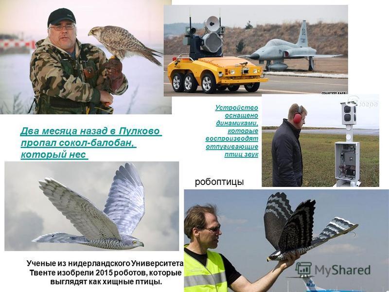 Два месяца назад в Пулково пропал сокол-балабан, который нес Устройство оснащено динамиками, которые воспроизводят отпугивающие птиц звук Ученые из нидерландского Университета Твенте изобрели 2015 роботов, которые выглядят как хищные птицы. робоптицы
