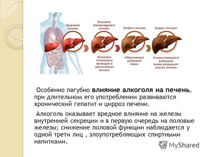 Особенно пагубно влияние алкоголя на печень, при длительном его употреблении развиваются хронический гепатит и цирроз печени. Алкоголь оказывает вредное влияние на железы внутренней секреции и в первую очередь на половые железы; снижение половой функ