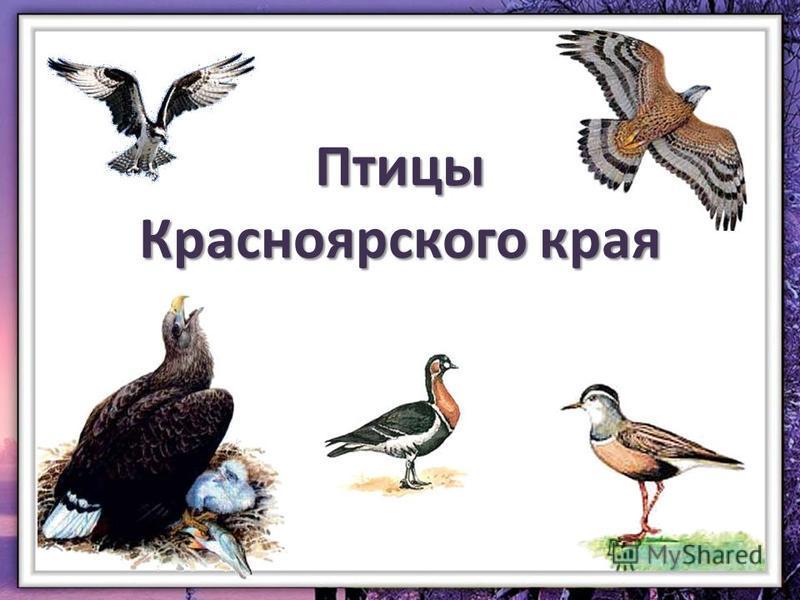 Птицы Красноярского края