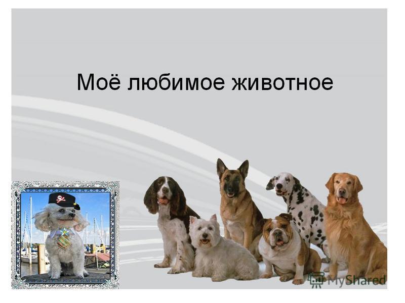 4 октября отмечается Всемирный день защиты животных. Решение празднования всемирного дня животных было принято в 1931 году на международной конференции сторонников движения защиты животных, проходивших во Флоренции.