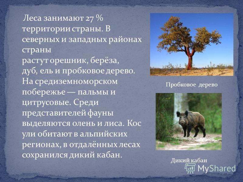 Леса занимают 27 % территории страны. В северных и западных районах страны растут орешник, берёза, дуб, ель и пробковое дерево. На средиземноморском побережье пальмы и цитрусовые. Среди представителей фауны выделяются олень и лиса. Кос ули обитают в