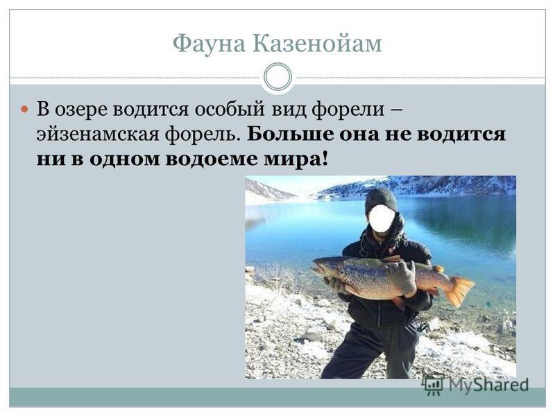 Фауна Казенойам В озере водится особый вид форели – эйзенамская форель. Больше она не водится ни в одном водоеме мира!