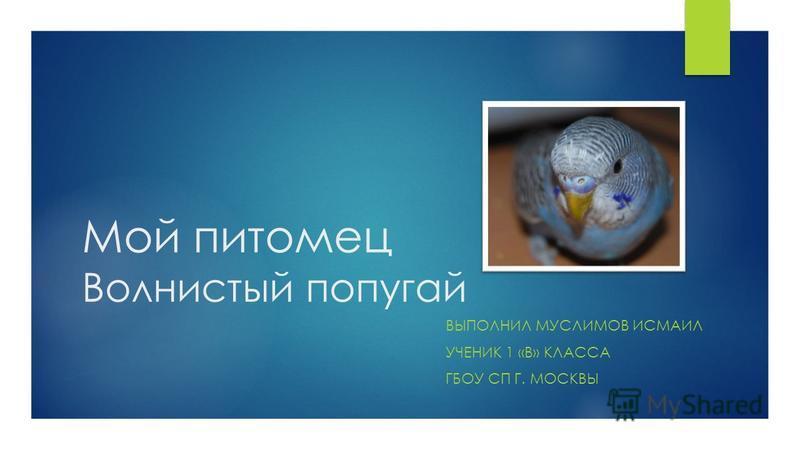 Мой питомец Волнистый попугай ВЫПОЛНИЛ МУСЛИМОВ ИСМАИЛ УЧЕНИК 1 «В» КЛАССА ГБОУ СП Г. МОСКВЫ