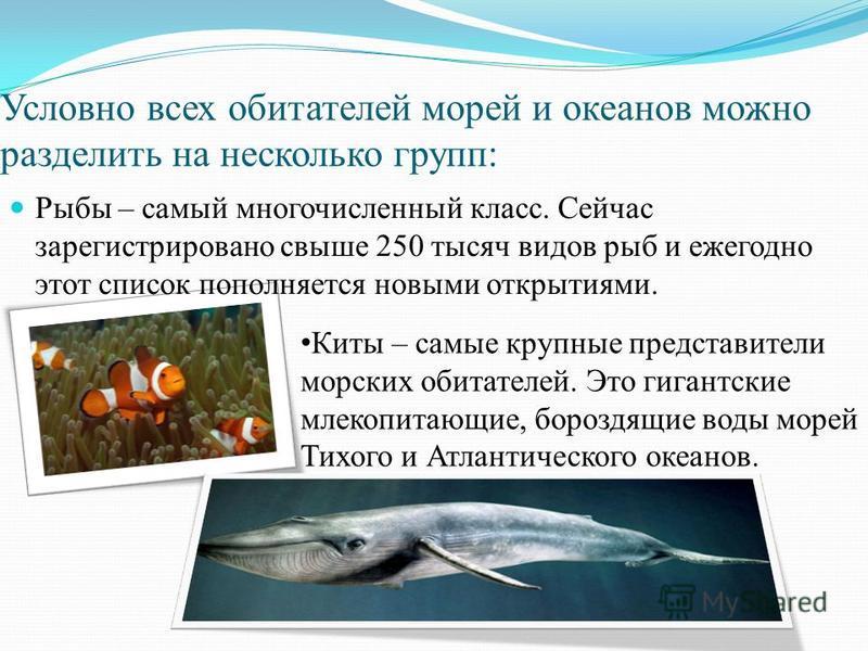 Условно всех обитателей морей и океанов можно разделить на несколько групп: Рыбы – самый многочисленный класс. Сейчас зарегистрировано свыше 250 тысяч видов рыб и ежегодно этот список пополняется новыми открытиями. Киты – самые крупные представители