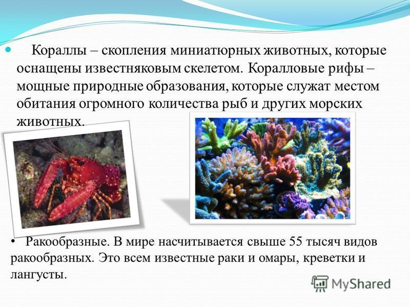 Кораллы – скопления миниатюрных животных, которые оснащены известняковым скелетом. Коралловые рифы – мощные природные образования, которые служат местом обитания огромного количества рыб и других морских животных. Ракообразные. В мире насчитывается с