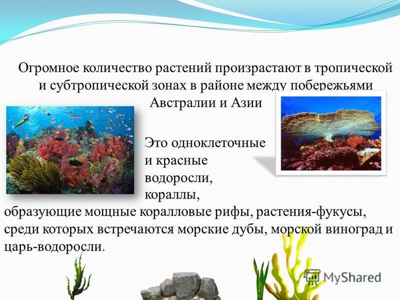 Огромное количество растений произрастают в тропической и субтропической зонах в районе между побережьями Австралии и Азии образующие мощные коралловые рифы, растения-фукусы, среди которых встречаются морские дубы, морской виноград и царь-водоросли.