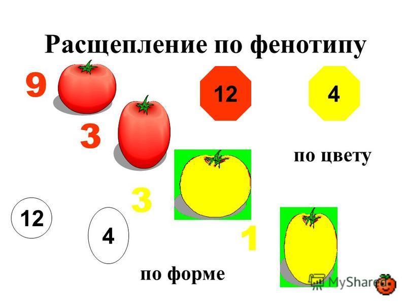 Расщепление по фенотипу 9 3 3 1 12 по цвету 4 по форме 124