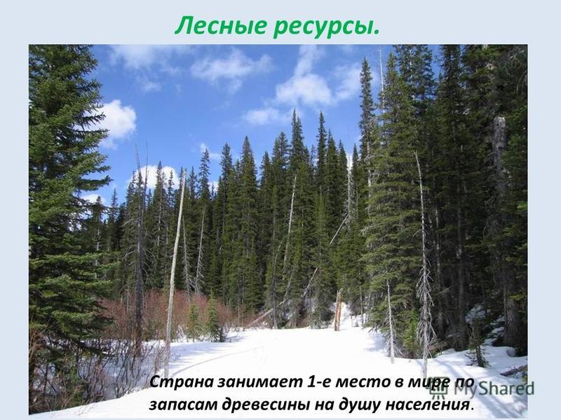 Страна занимает 1-е место в мире по запасам древесины на душу населения. Лесные ресурсы.