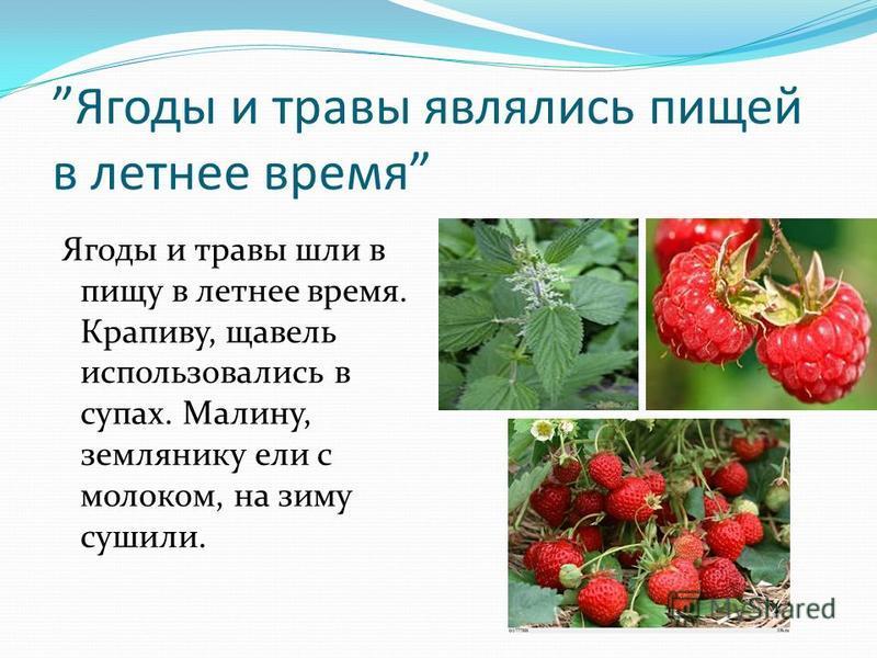 Ягоды и травы являлись пищей в летнее время Ягоды и травы шли в пищу в летнее время. Крапиву, щавель использовались в супах. Малину, землянику ели с молоком, на зиму сушили.
