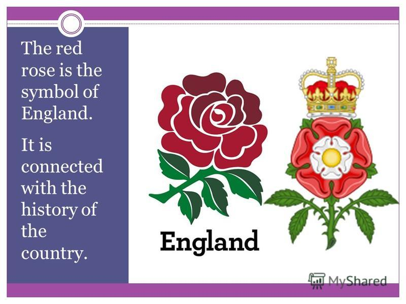 National Bird And Flower Of England Flowers Healthy