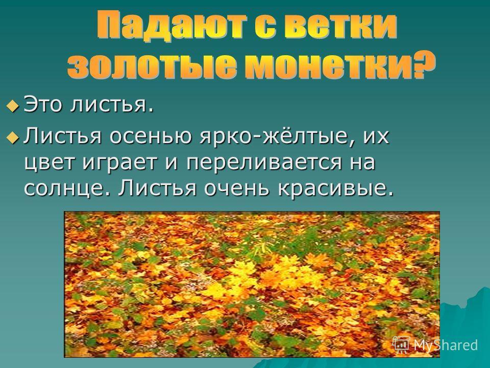 Это листья. Это листья. Листья осенью ярко-жёлтые, их цвет играет и переливается на солнце. Листья очень красивые. Листья осенью ярко-жёлтые, их цвет играет и переливается на солнце. Листья очень красивые.
