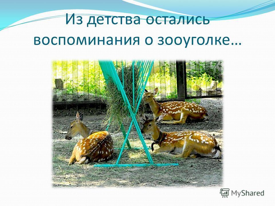 Из детства остались воспоминания о зооуголке…