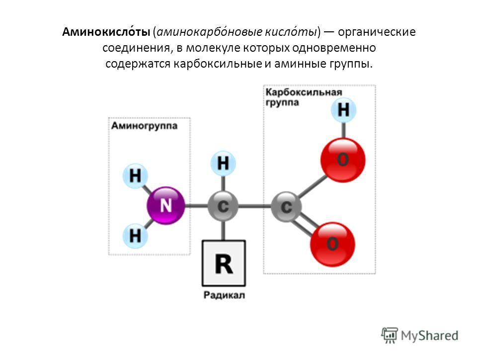 Аминокисло́ты (аминокарбо́новые кисло́ты) органические соединения, в молекуле которых одновременно содержатся карбоксильные и аминные группы.