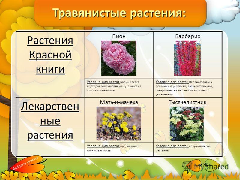 Травянистые растения: Растения Красной книги ПионБарбарис Условия для роста: Условия для роста: больше всего подходят окультуренные суглинистые слабокислые почвы Условия для роста: Условия для роста: Неприхотливы к почвенным условиям, засухоустойчивы
