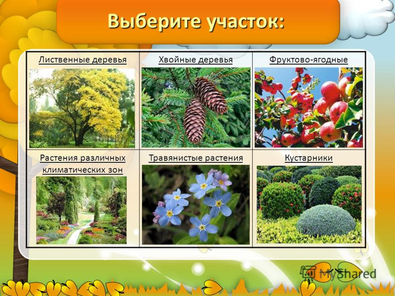 Выберите участок: Лиственные деревья Хвойные деревья Фруктово-ягодные деревья Растения различных климатических зон Травянистые растения Кустарники