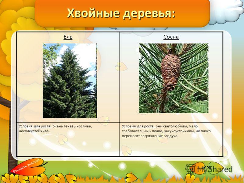 Хвойные деревья: ЕльСосна Условия для роста: Условия для роста: очень теневынослива, несолеустойчива. Условия для роста: Условия для роста: они светолюбивы, мало требовательны к почве, засухоустойчивы, но плохо переносят загрязнение воздуха. Выбрать