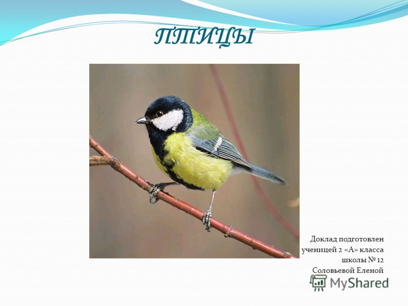 Биология доклад на тему птицы 8731