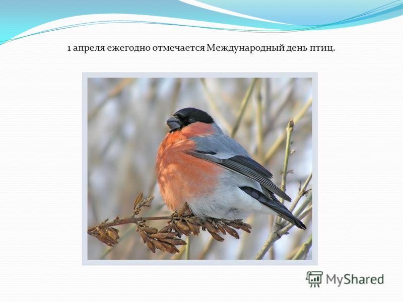 1 апреля ежегодно отмечается Международный день птиц.