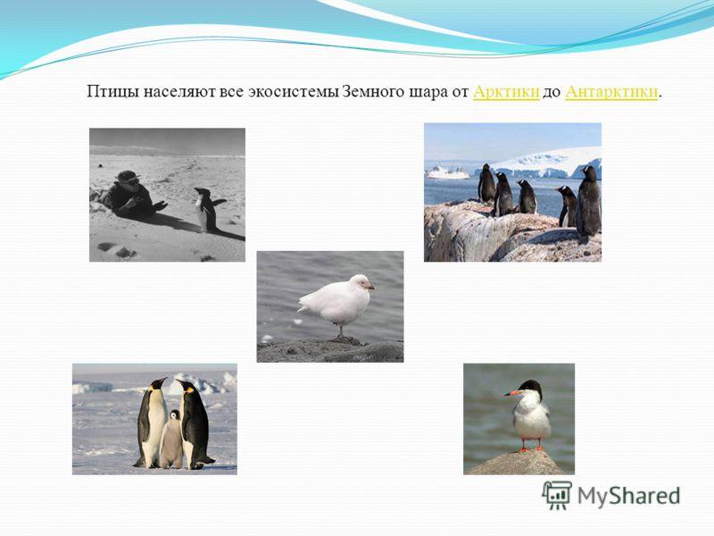 Птицы населяют все экосистемы Земного шара от Арктики до Антарктики.АрктикиАнтарктики