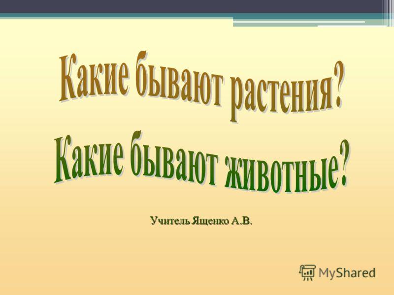Учитель Ященко А.В.