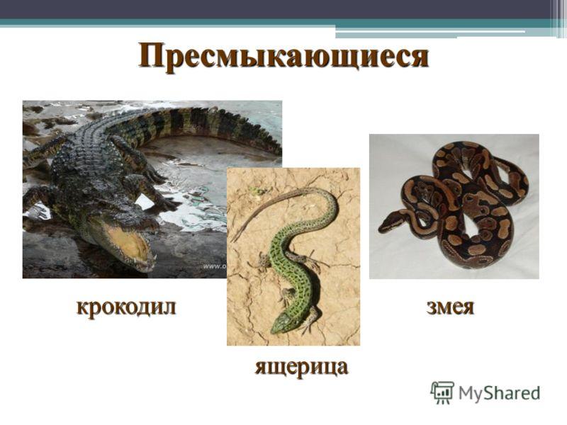 Пресмыкающиеся крокодил ящерица змея