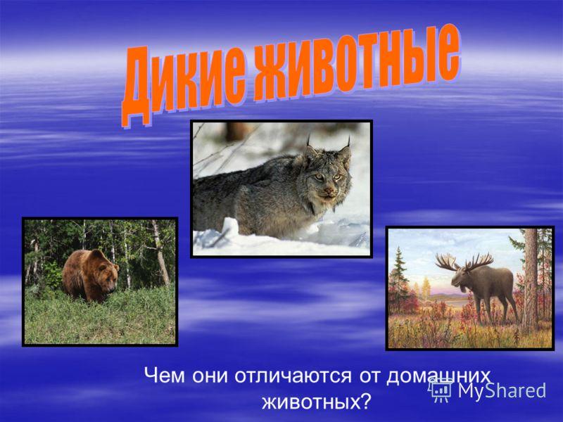Чем они отличаются от домашних животных?