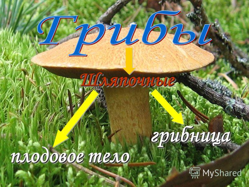 грибы грибы животные животные растения растения