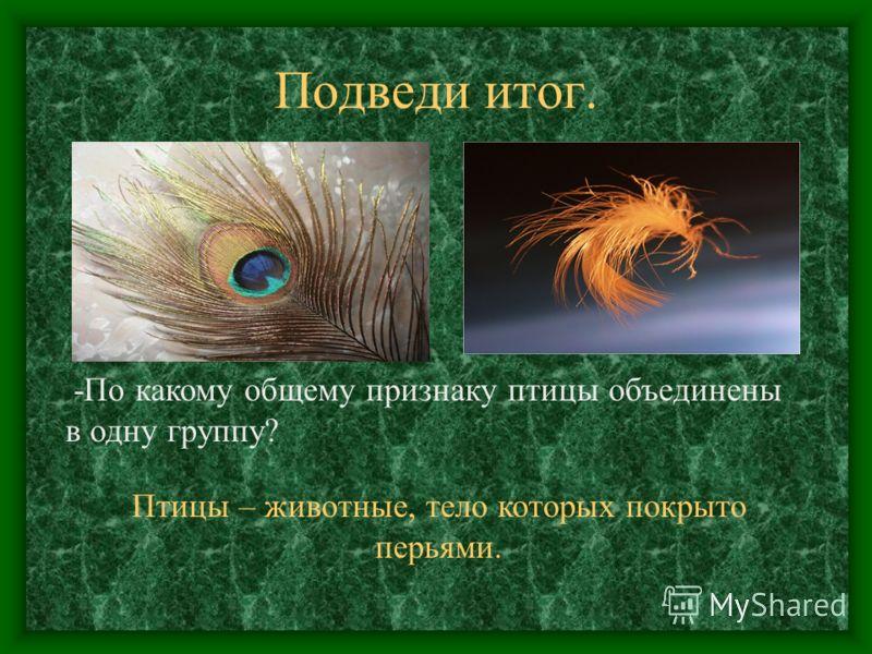 Подведи итог. Птицы – животные, тело которых покрыто перьями. -По какому общему признаку птицы объединены в одну группу?