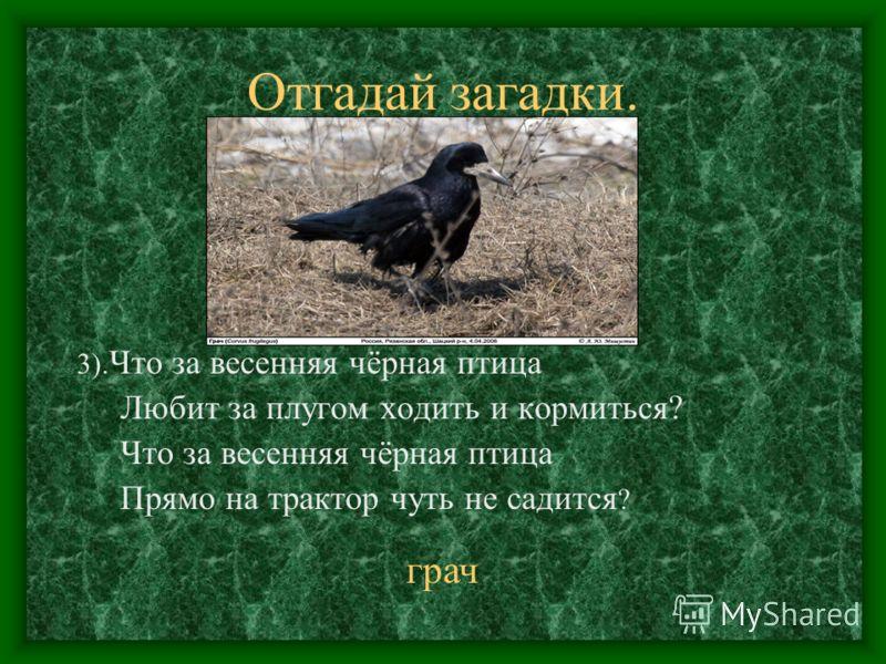 Отгадай загадки. 3). Что за весенняя чёрная птица Любит за плугом ходить и кормиться? Что за весенняя чёрная птица Прямо на трактор чуть не садится ? грач