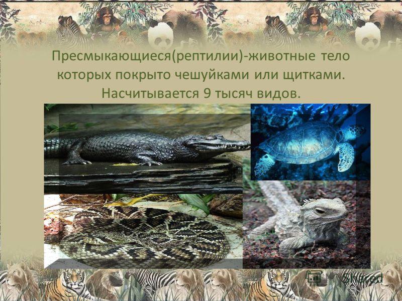 Пресмыкающиеся(рептилии)-животные тело которых покрыто чешуйками или щитками. Насчитывается 9 тысяч видов.