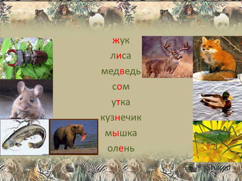жук лиса медведь сомсом утка кузнечик мышка олень