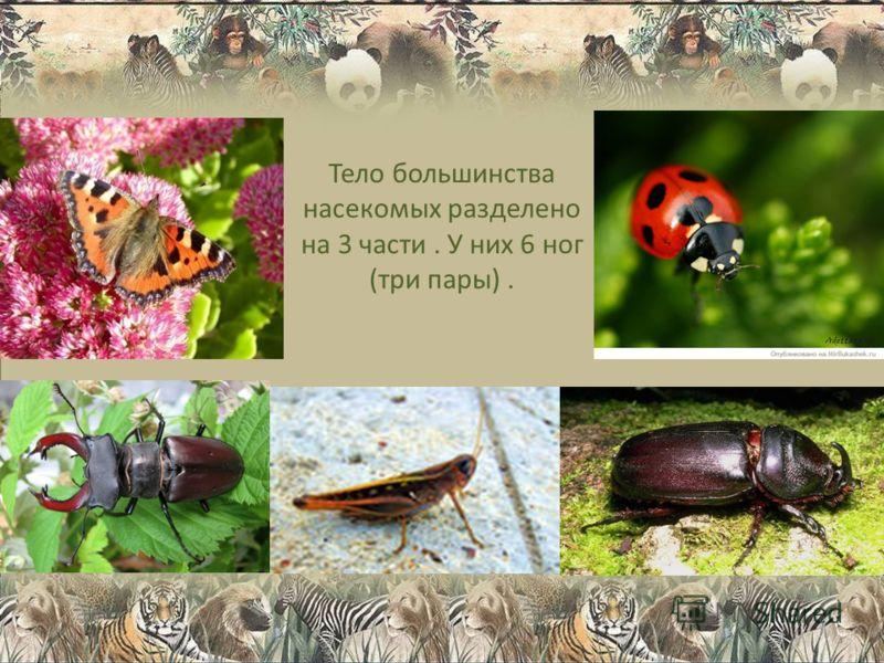 Тело большинства насекомых разделено на 3 части. У них 6 ног (три пары).