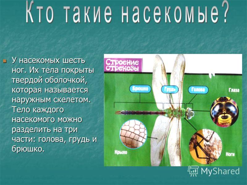 У насекомых шесть ног. Их тела покрыты твердой оболочкой, которая называется наружным скелетом. Тело каждого насекомого можно разделить на три части: голова, грудь и брюшко. У насекомых шесть ног. Их тела покрыты твердой оболочкой, которая называется