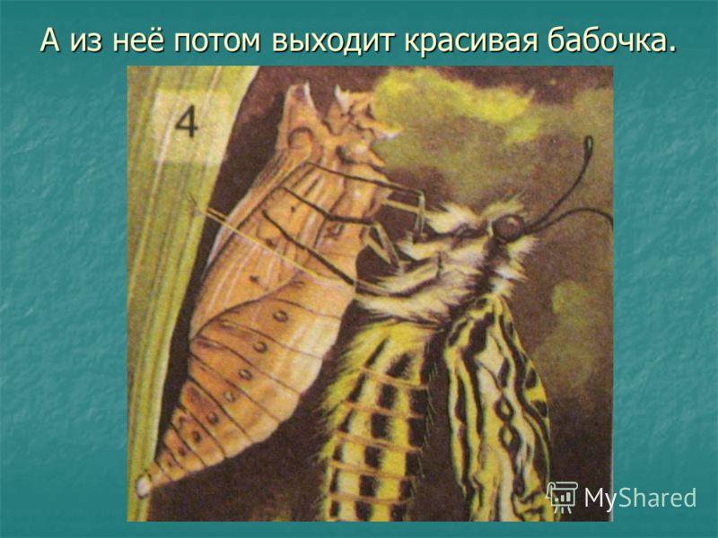 А из неё потом выходит красивая бабочка.