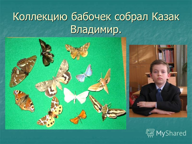 Коллекцию бабочек собрал Казак Владимир.