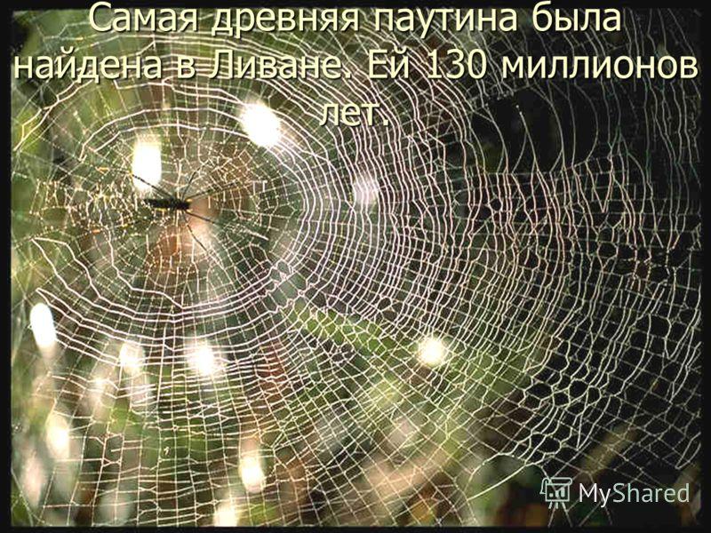 Самая древняя паутина была найдена в Ливане. Ей 130 миллионов лет.