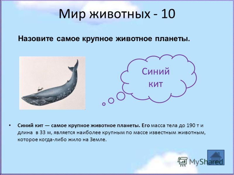 Мир животных - 10 Синий кит самое крупное животное планеты. Его масса тела до 190 т и длина в 33 м, является наиболее крупным по массе известным животным, которое когда-либо жило на Земле. Синий кит Назовите самое крупное животное планеты.