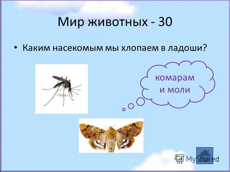 Мир животных - 30 Каким насекомым мы хлопаем в ладоши? комарам и моли