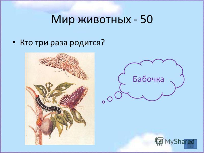 Мир животных - 50 Кто три раза родится? Бабочка